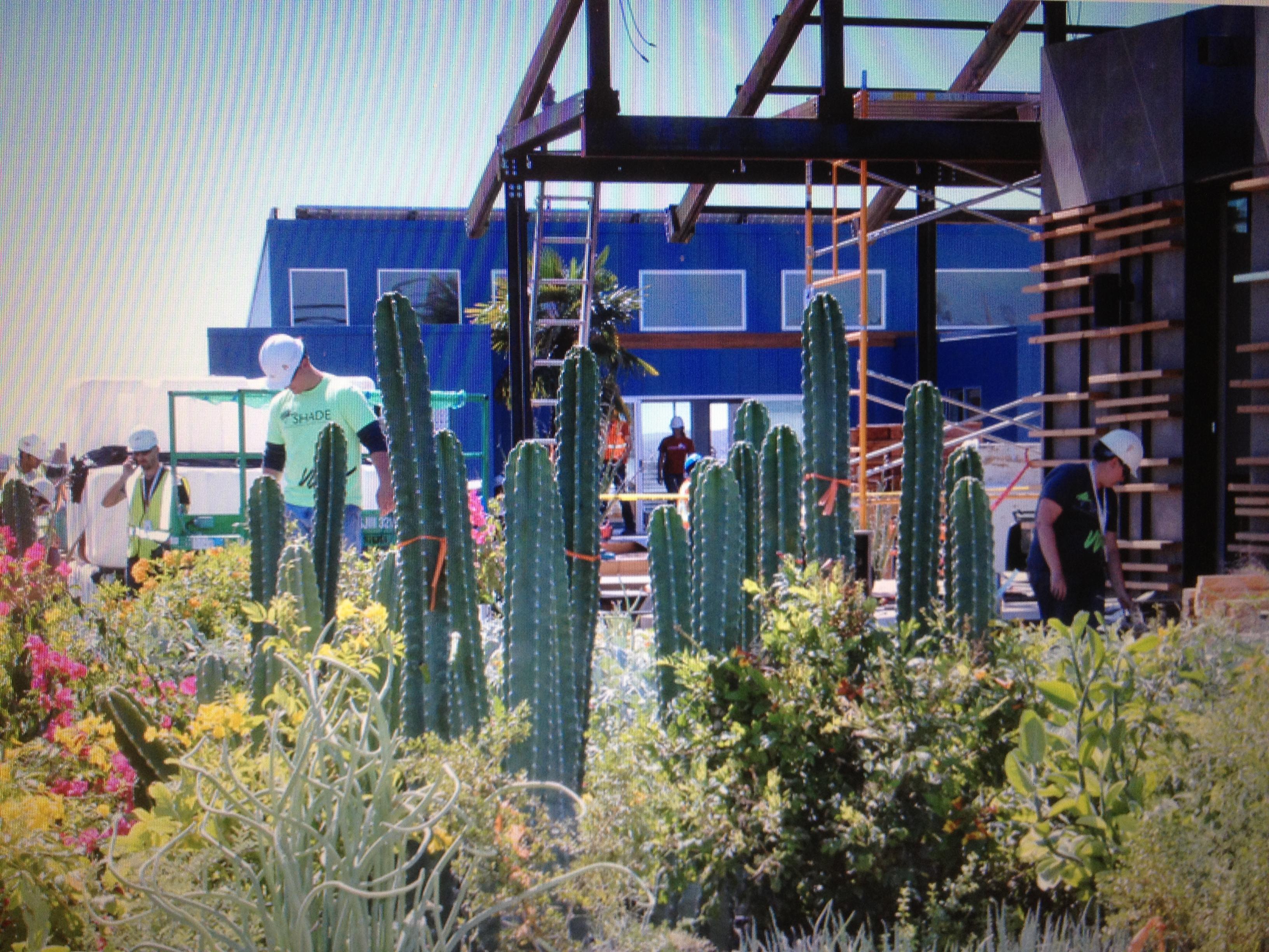 Solar Decathlon 2013-Native desert plants surround construction site of Arizona State University &  University of NM SHADE Solar Homes Adapting for Desert Equilibrium credit Carol Anna
