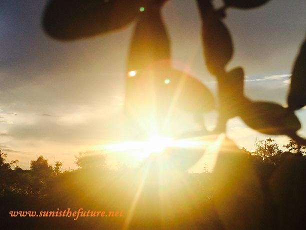 Sun shines through leaves in Windermere, FL (credit: sunisthefuture-Susan Sun Nunamaker)